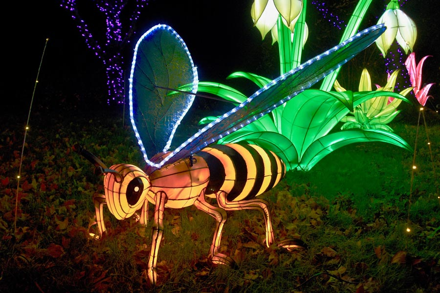 Winter Lights at the North Carolina Arboretum 2020